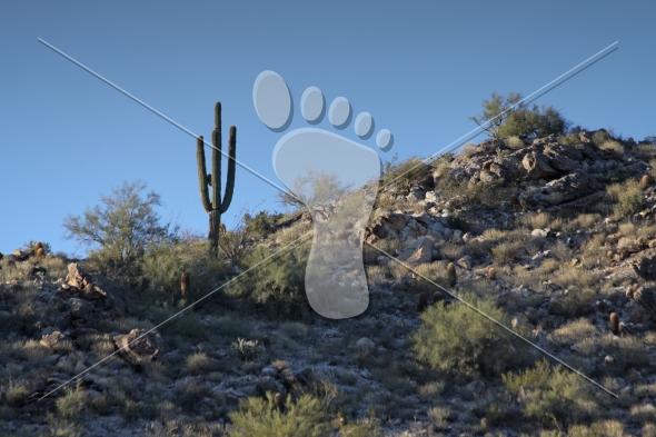 Desert Mountain Cactus